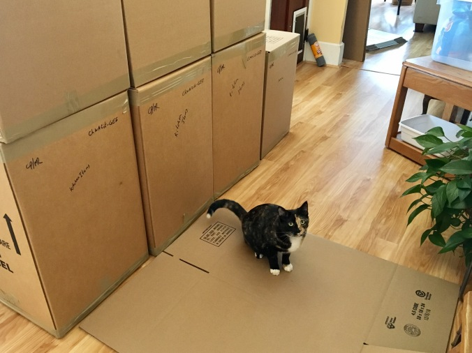 Cat with boxes.